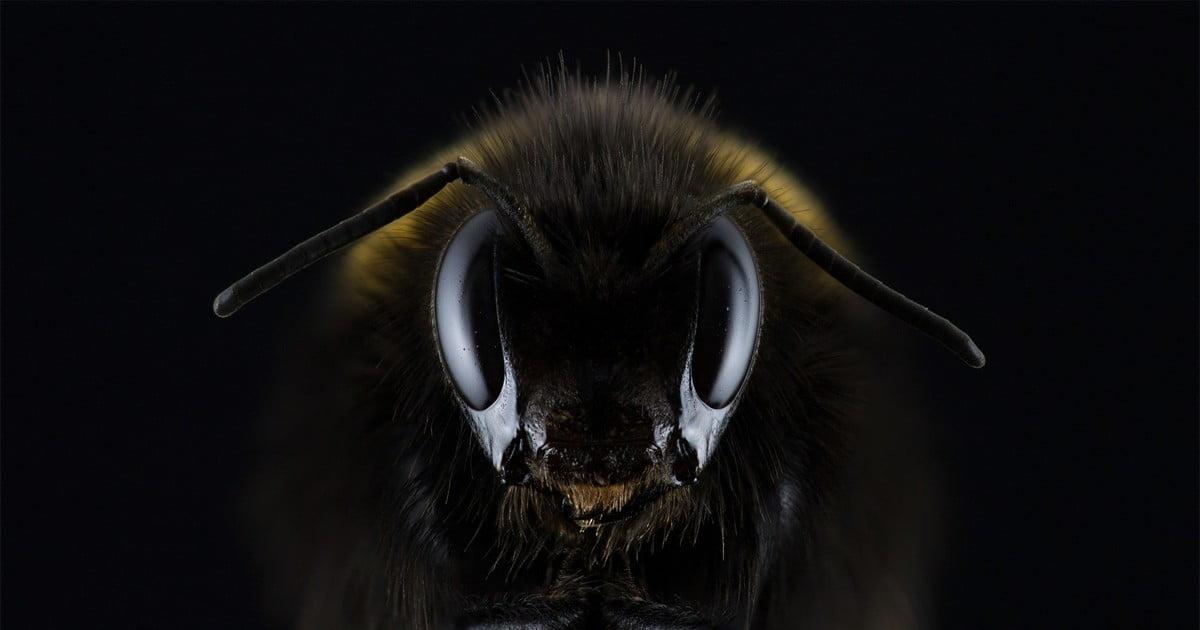 Ejercicio listening B1 – El ataque de los hornets